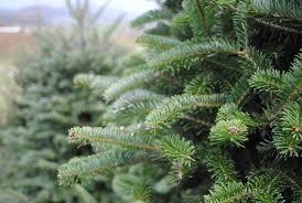 christmastreecloseup